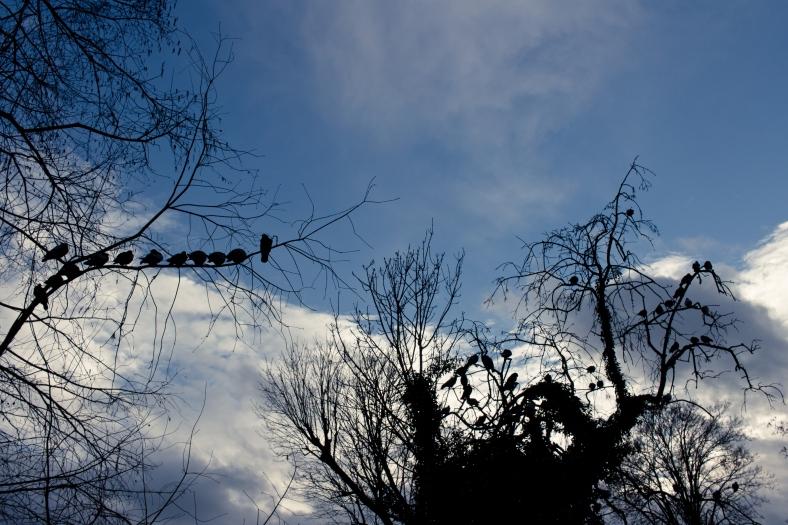line of birds.jpg