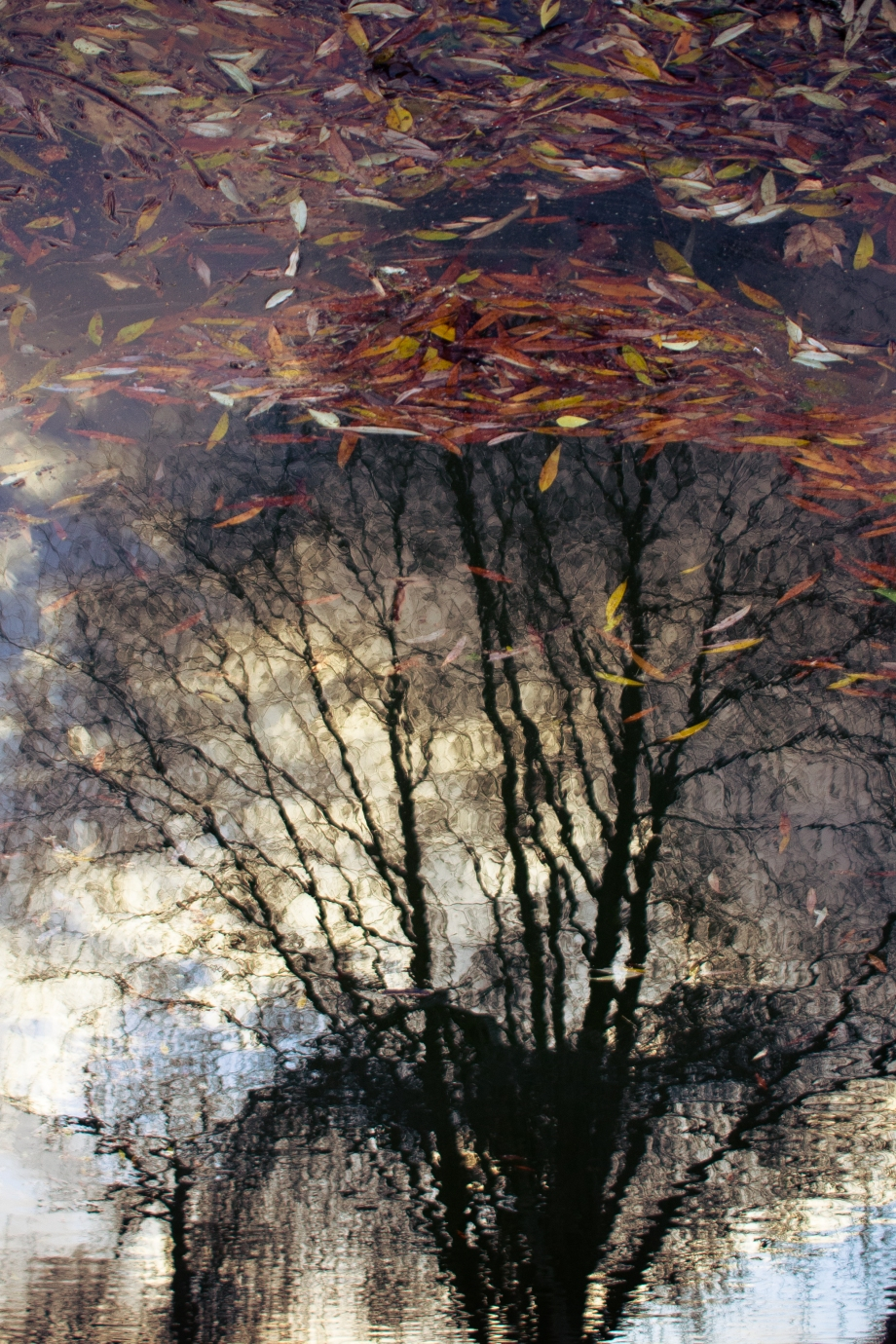 tree reflection.jpg